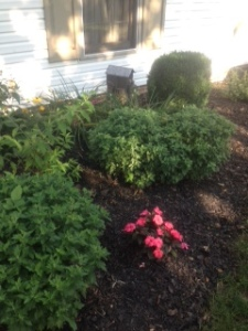 Mid-summer flower bed1