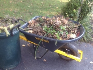 Wheel barrow of weeds