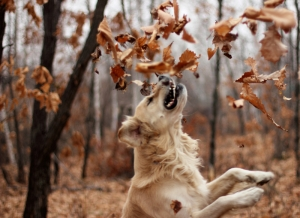 Brody and Leaves